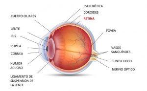 desprendimiento de la retina del ojo